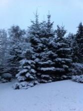 sneeuwdennen